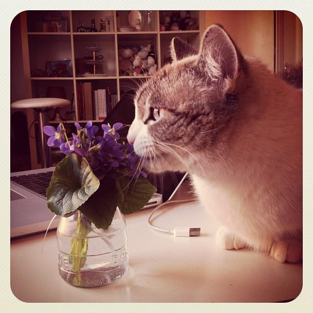 neko and the violets